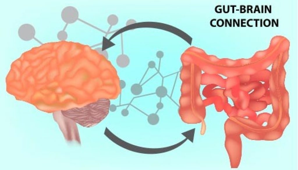 The Gut-Brain Connection Is Important For Mental Health And More!